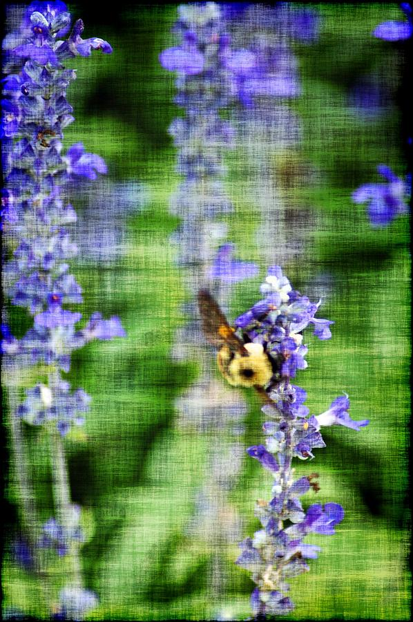 Bees Photograph - Dance Of The Bubblebee by Donna Bentley