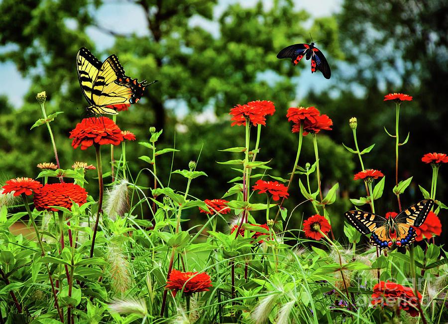 Dance of The Butterflies by KaFra Art
