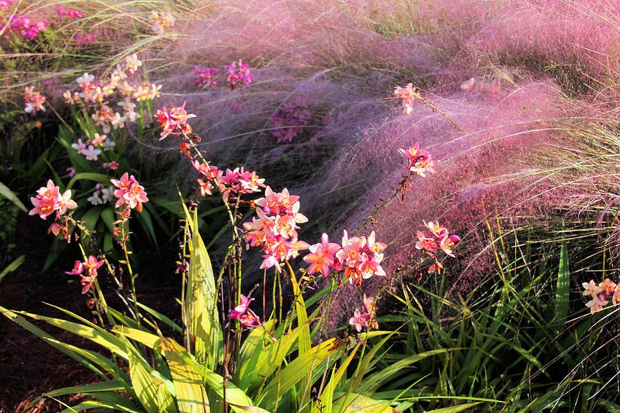 Flower Photograph - Dance Of The Orchids by Rosalie Scanlon