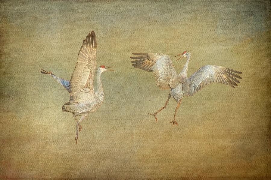 Nature Photograph - Dance Ritual II, Sandhill Cranes by Zayne Diamond Photographic