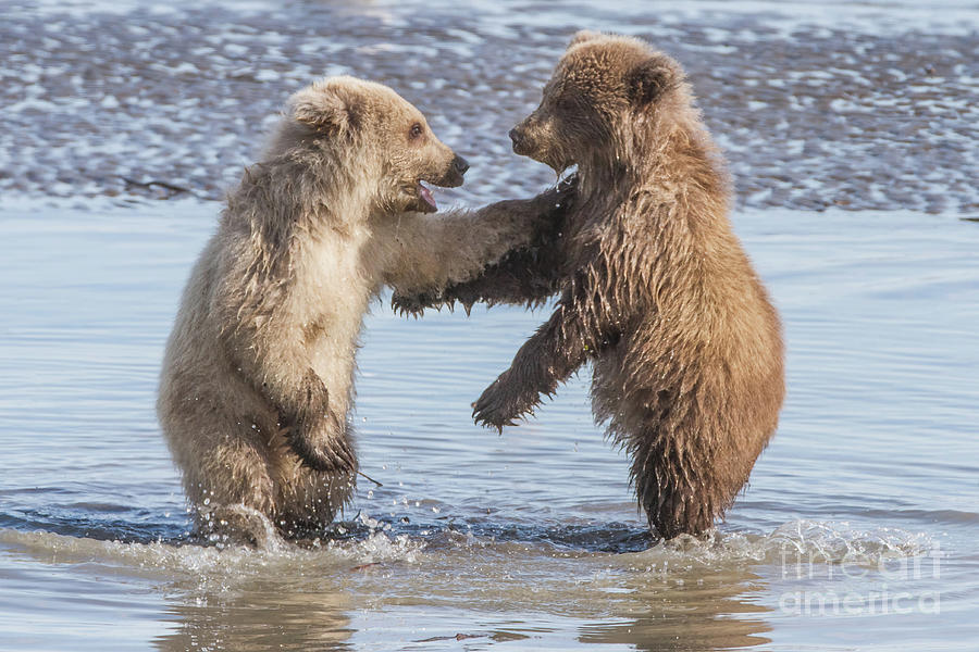 Dancing Bears by Chris Scroggins