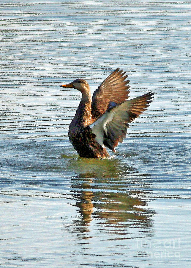 Duck Photograph - Dancing Duck by Carol Groenen