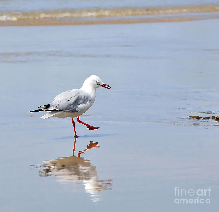 Seagull Photograph - Dancing In Time With My Reflection by Kaye Menner