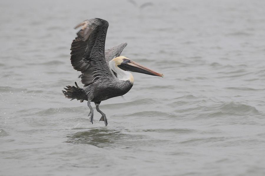 Dancing on the Water by Sue Jarrett
