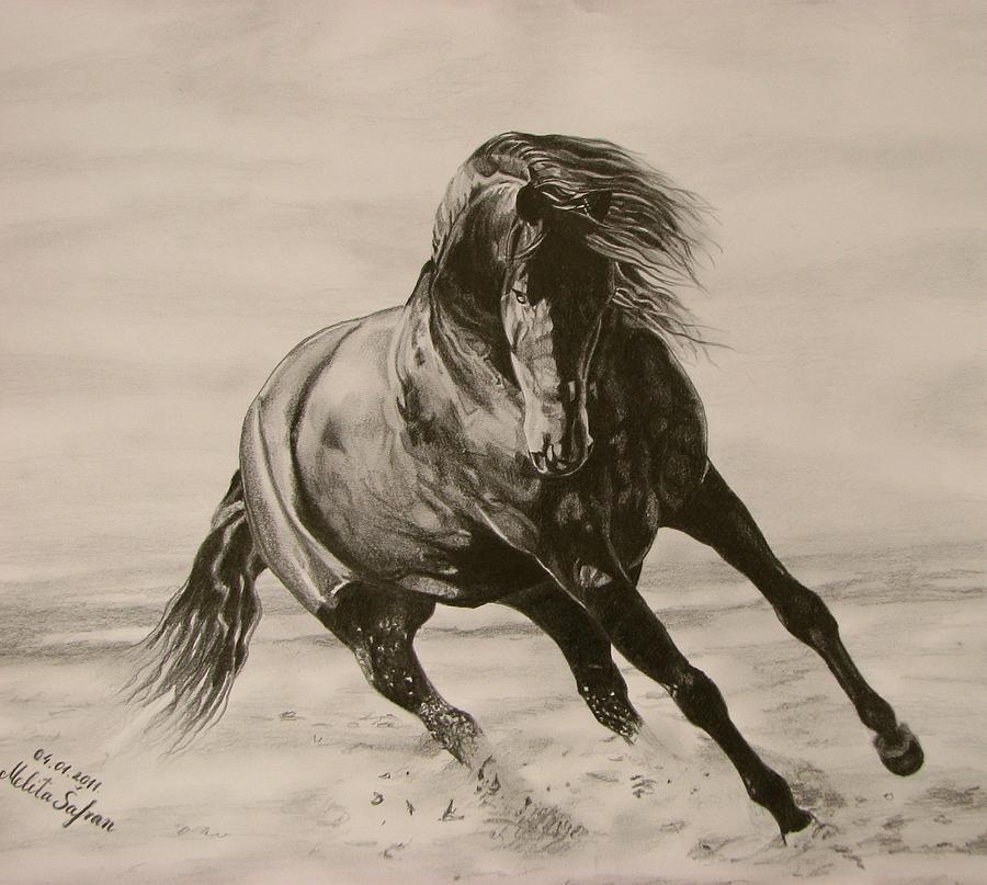 Horse Drawing - Dancing Pace by Melita Safran