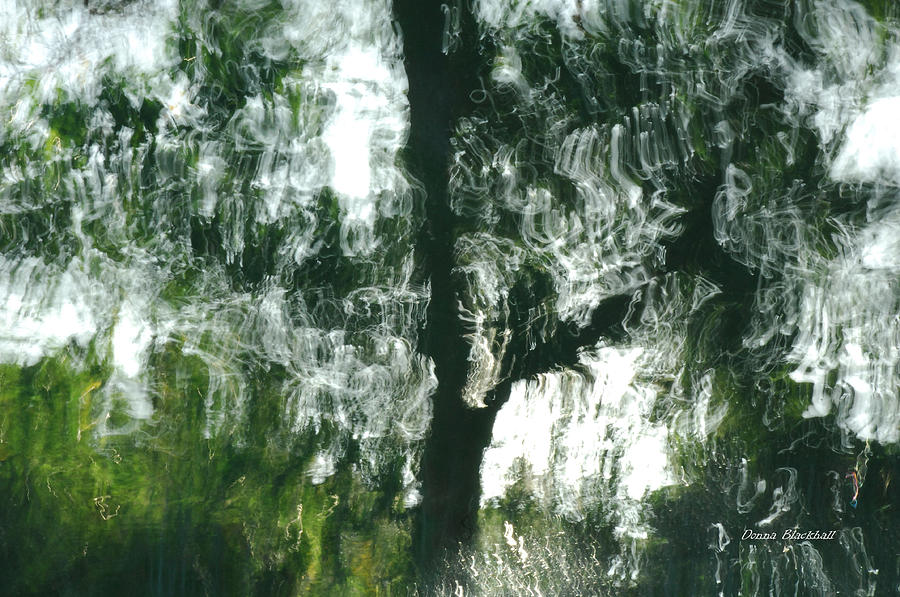 Water Photograph - Dancing Trees by Donna Blackhall
