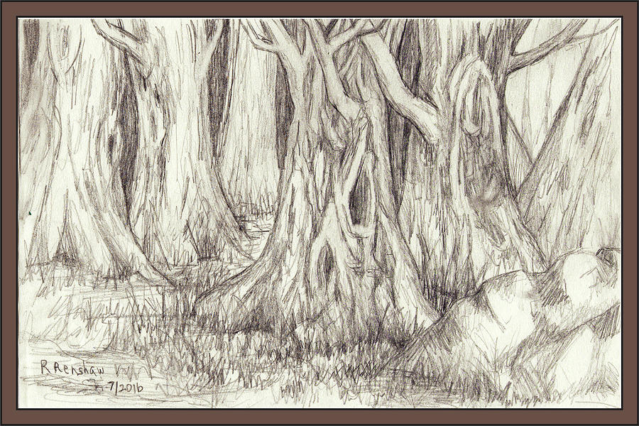 Pencil Drawing Drawing - Dancing Trees by Ruth Renshaw