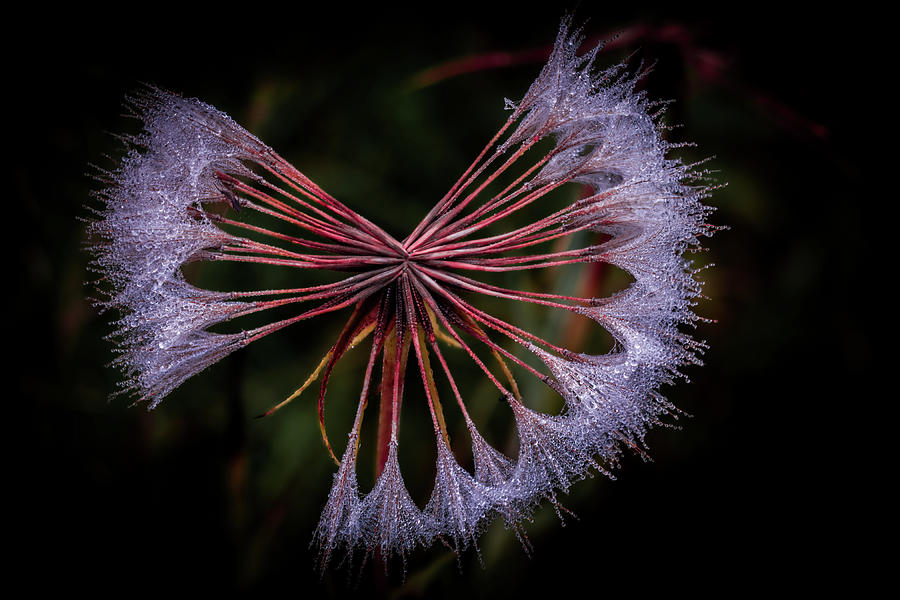 Nature Photograph - Dancing with Dew by Paul Malen