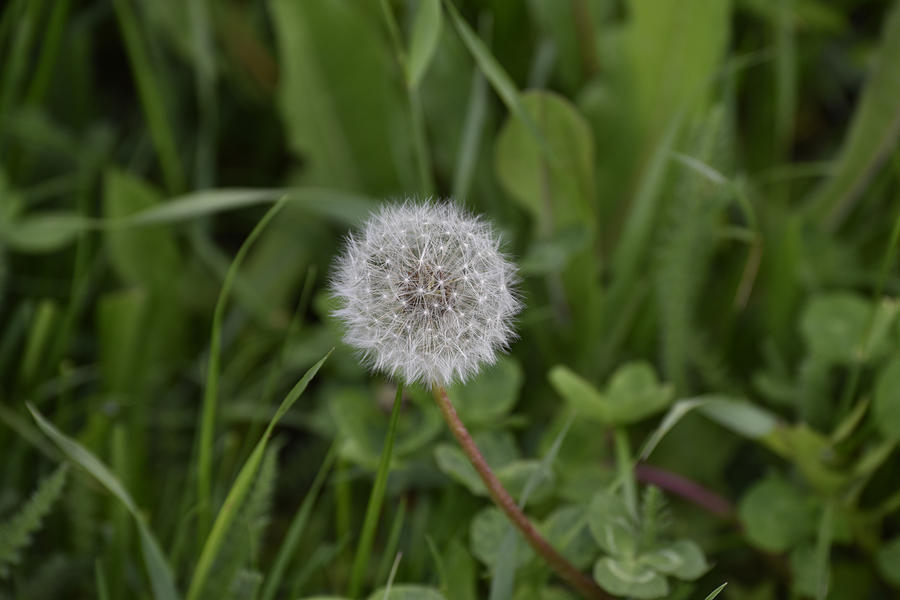 Abstract Photograph - Dandelion at the end by Adrian Bud