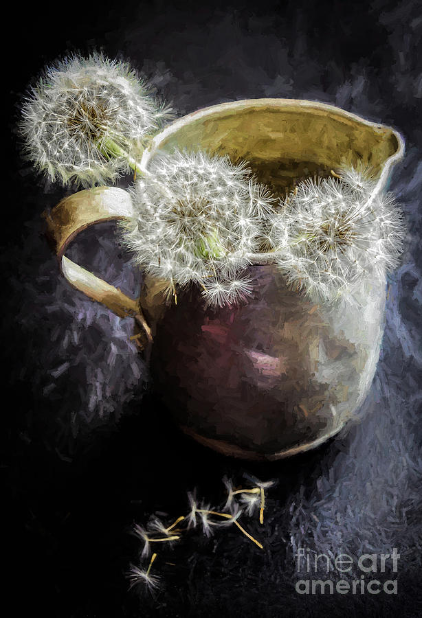 Dandelion Blowballs In Tin Pitcher Photograph