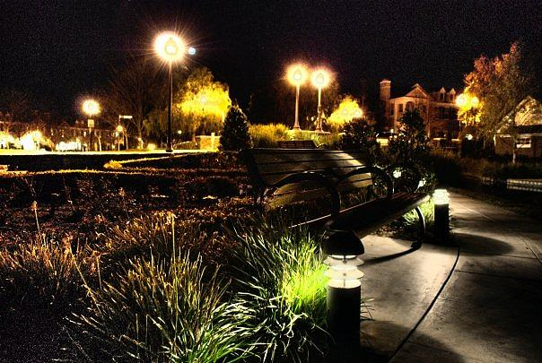 Dandelion Lights Photograph by Matthew Derr