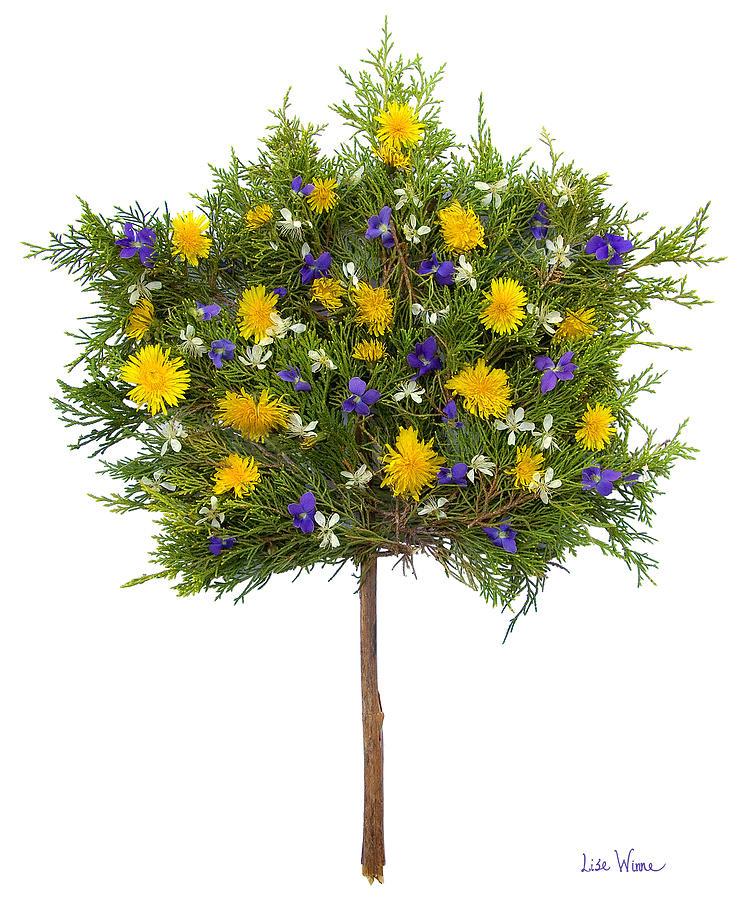 Dandelion Photograph - Dandelion Violet Tree by Lise Winne
