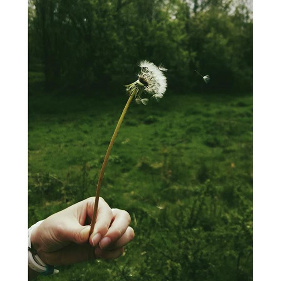 Walks Photograph - #dandelionclock #dandelion #nature by Natalie Anne