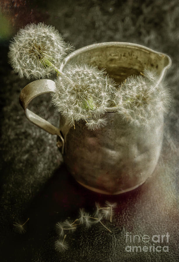 Pitcher Photograph - Dandelions In Pitcher-textured by Kathleen K Parker