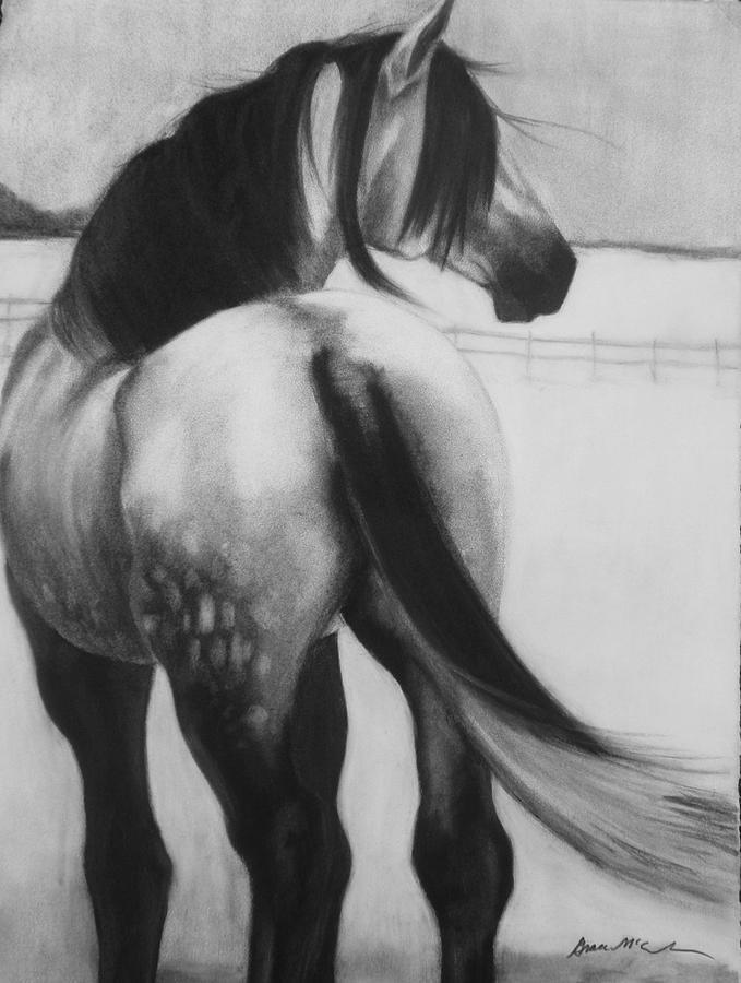 Horse Drawing - Dapple In Winter by Grace McCracken
