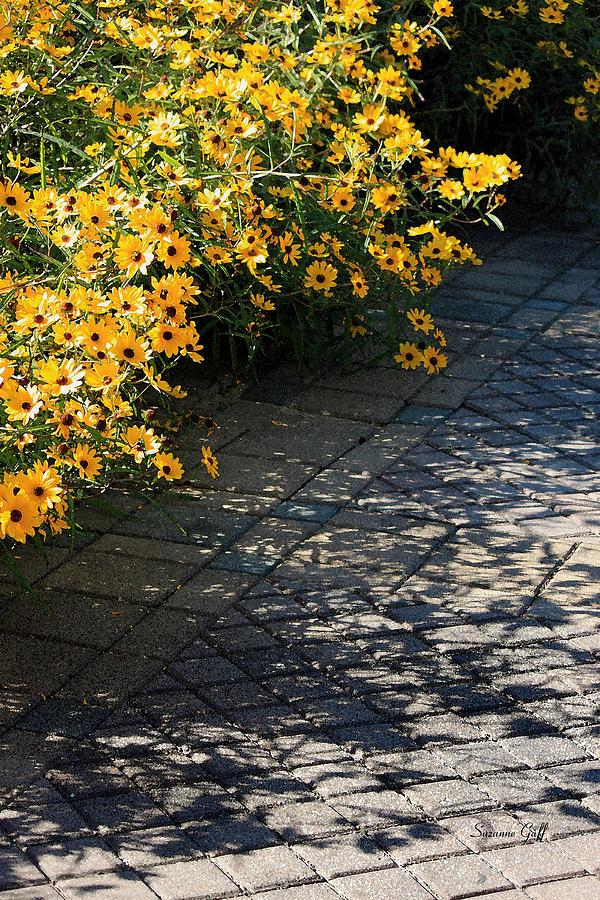 Sunflowers Photograph - Dappled Light by Suzanne Gaff