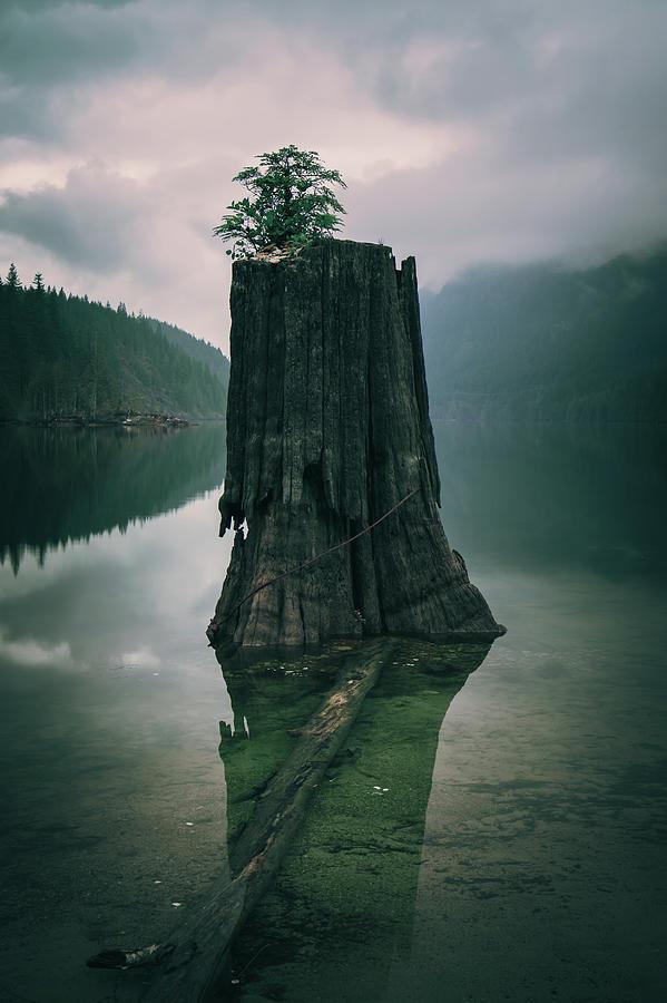 Canada Photograph - Dark And Gloomy by Windy Corduroy