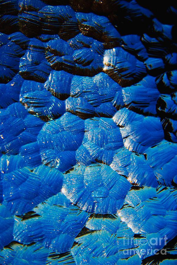Glass Photograph - Dark Blue by Hideaki Sakurai