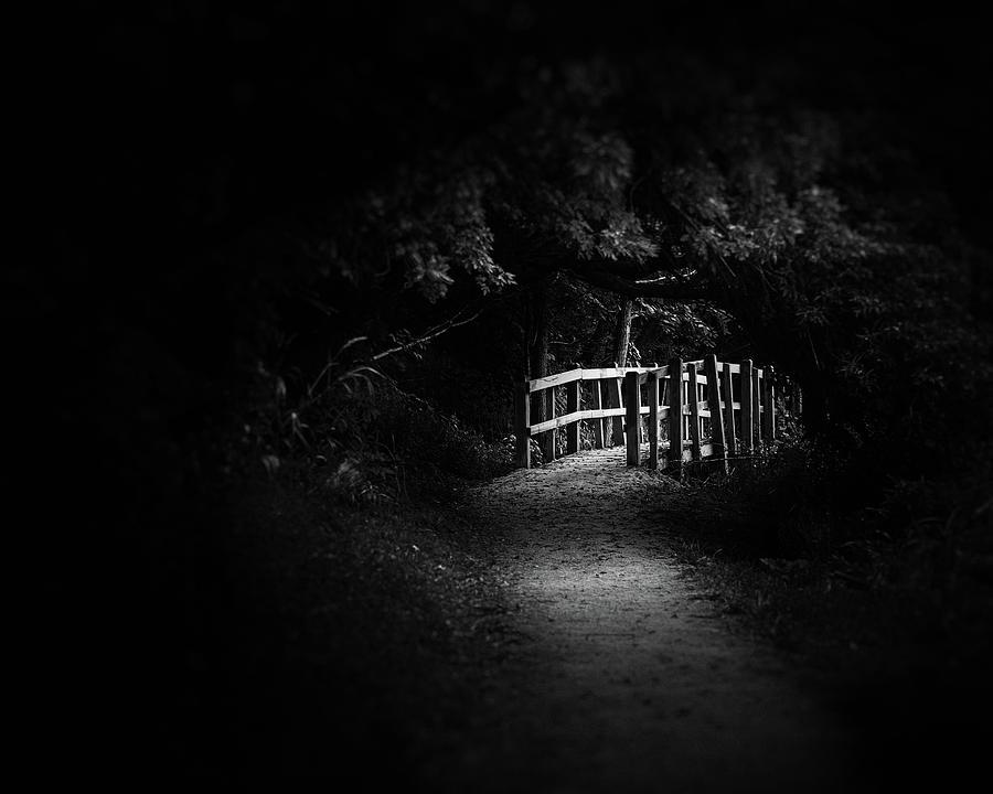 Dark Footbridge Photograph