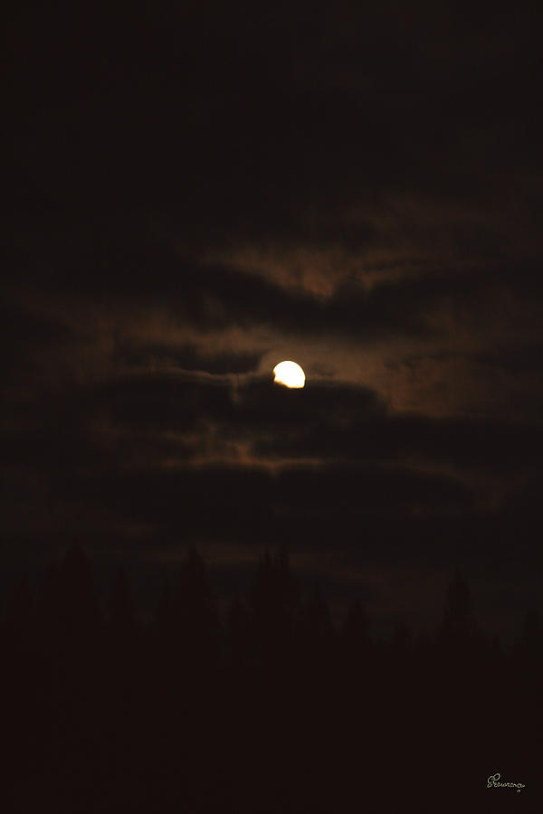 Dark Night Photograph by Andrea Lawrence