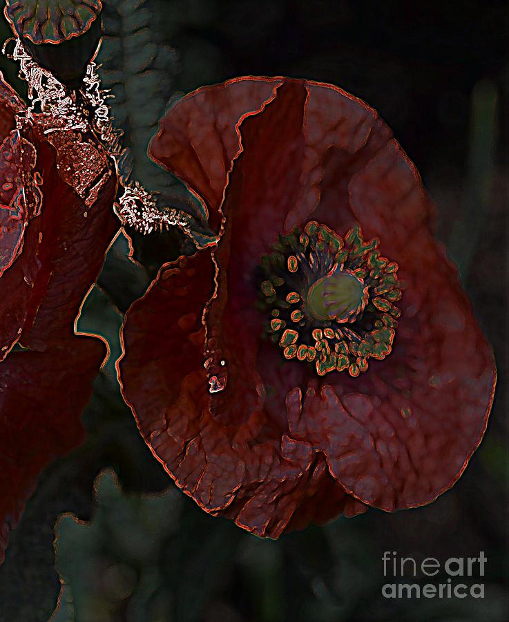 Dark Poppy by Diane montana Jansson