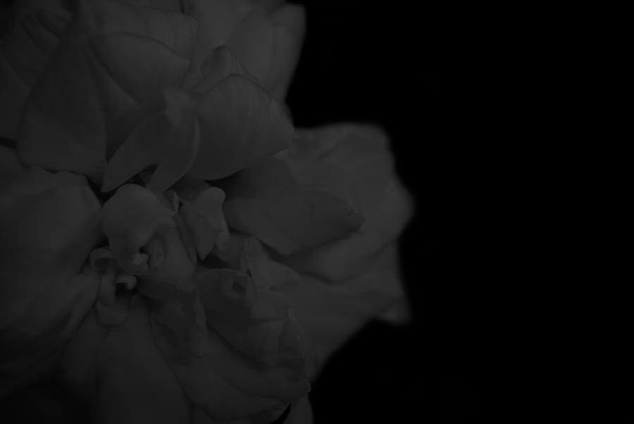 Dark Photograph - Dark Rose by Bransen Devey