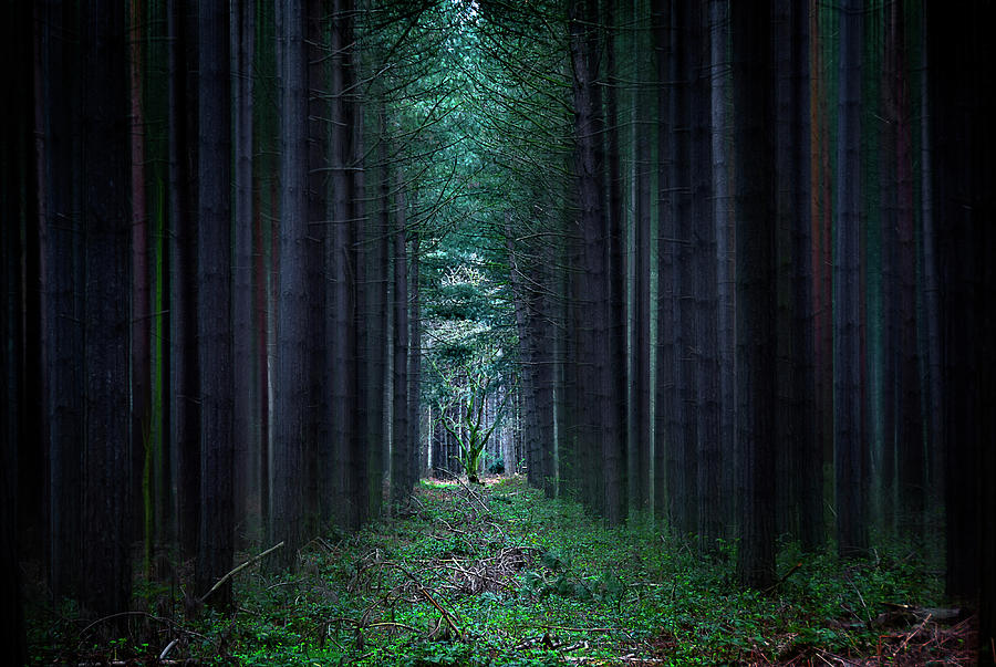 Forest Photograph - Dark Side Of Forest by Svetlana Sewell