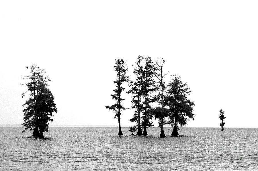 Water Photograph - Dark Sound by Angela DiPietro