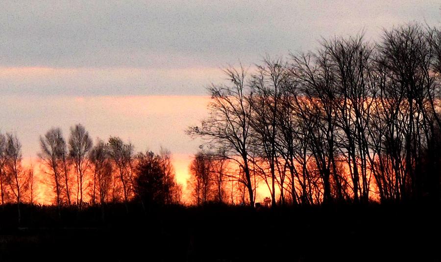 Landscape Digital Art - Dark Trees At Sunset Wc  by Lyle Crump