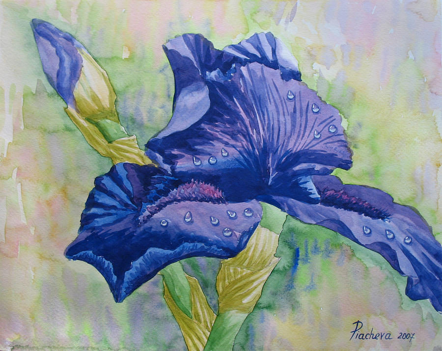 Flowers Painting - Dark Violet Iris. 2007 by Natalia Piacheva