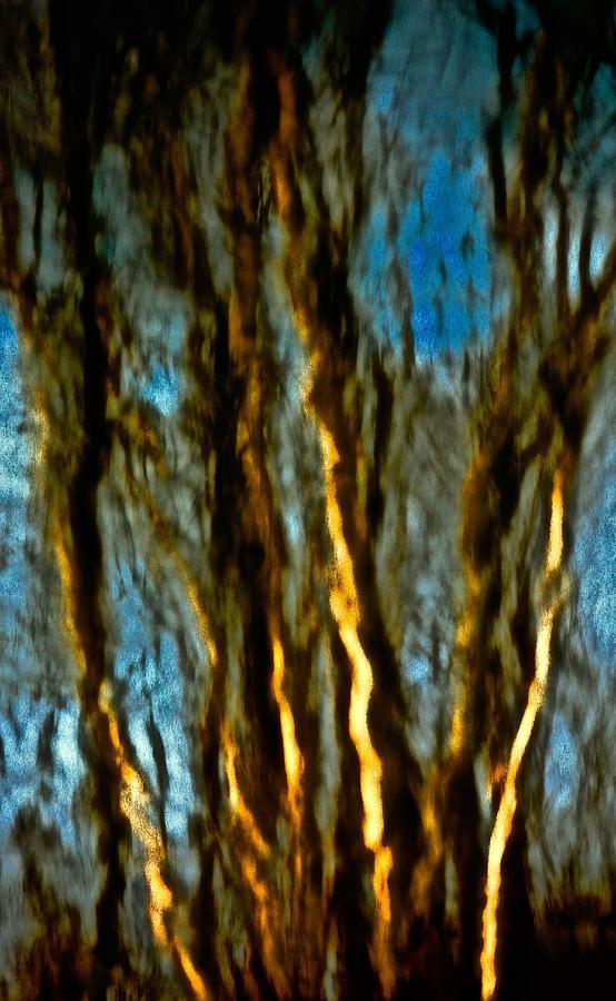 Landscape Photograph - Dark Wood by Gillis Cone