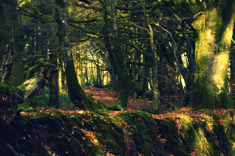 Trees Photograph - Dark Woods by Andy Thompson