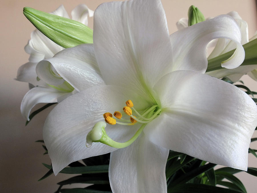 Flower Photograph - Darn Beautiful Flower by Scott Kingery