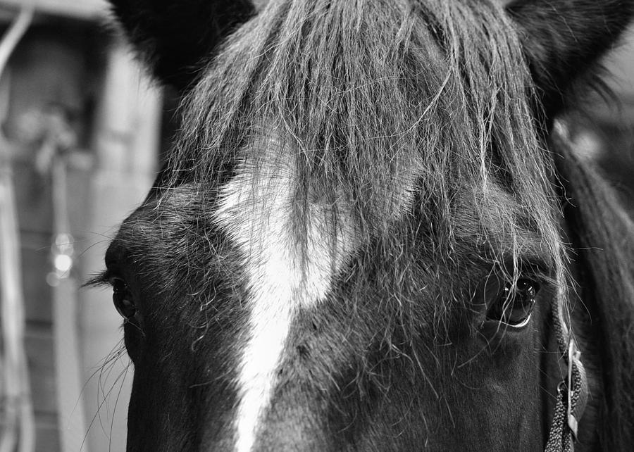 Horse Photograph - Dart by JAMART Photography