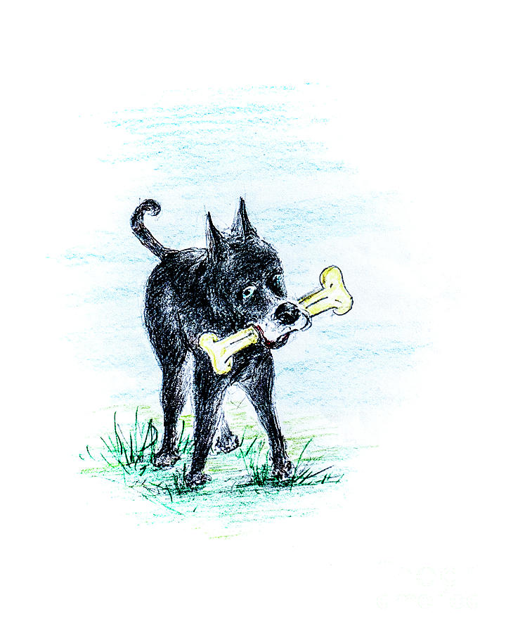 Dash Packing Her Bone Home Drawing