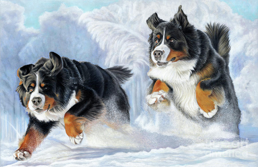 Bernese Painting - Dashing Through The Snow by Donna Mulley
