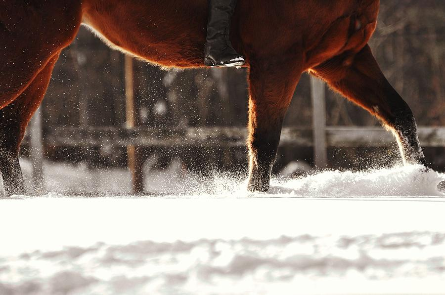 Horse Photograph - Dashing Through The Snow by JAMART Photography