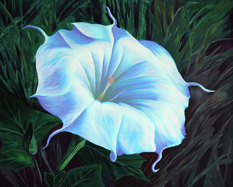 Datura Flower by Cheryl Fecht