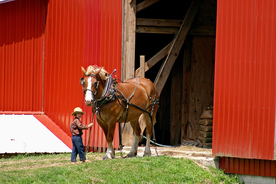 Amish Photograph - David And Goliath Number Two by Brian M Lumley