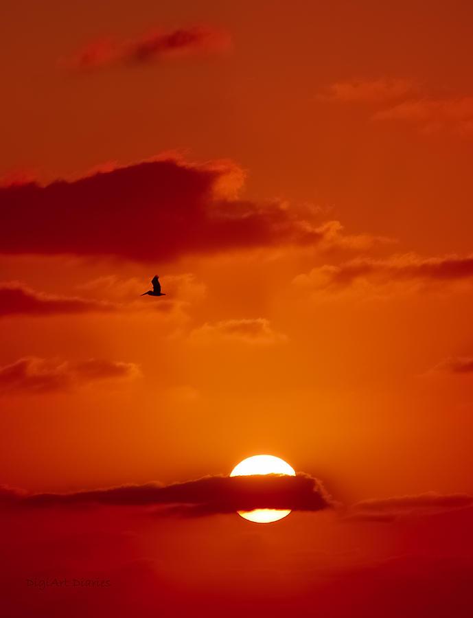 Pelican Digital Art - Dawn Flight by DigiArt Diaries by Vicky B Fuller