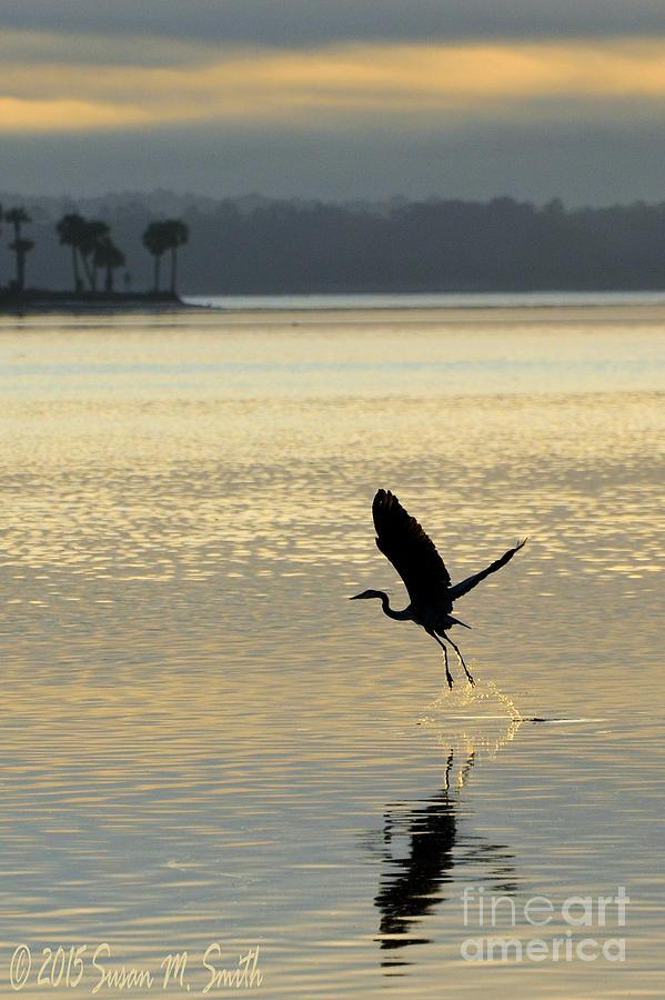 Dawns Early Flight by Susan Smith