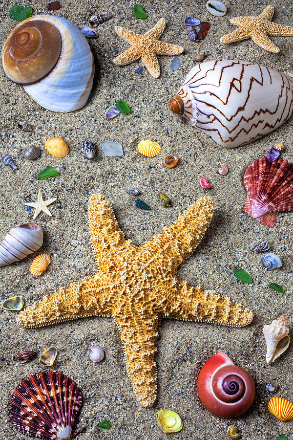 Starfish Photograph - Day At The Beach by Garry Gay