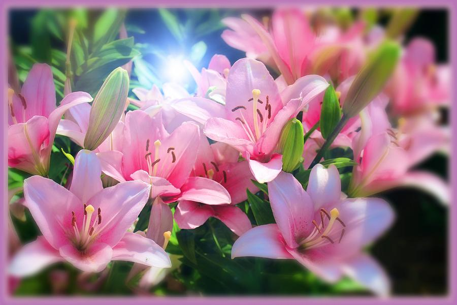 Day Lily Digital Art - Day Light Lilies by Mindy Newman