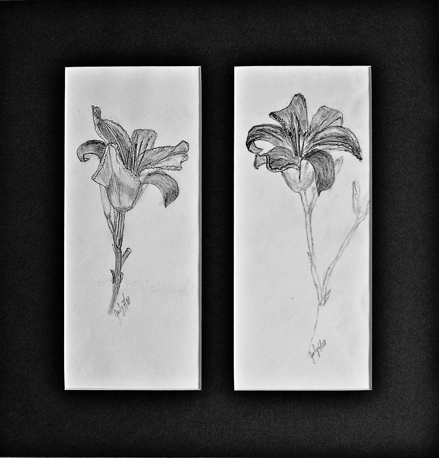 Pencil Sketches Drawing - Day lilies by Peggy King