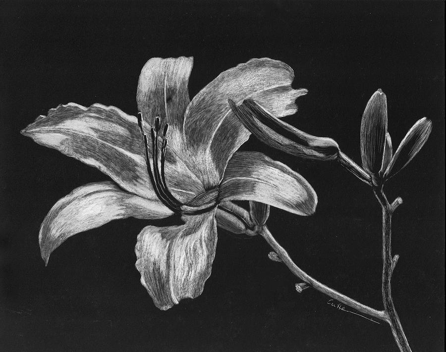 Lily Painting - Day Lily by Diane Cutter