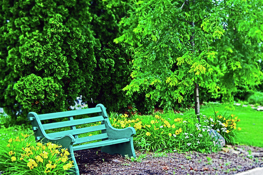 Day Lilys And A Park Bench Photograph