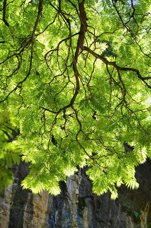 Tree Photograph - Daydream by Skip Hunt