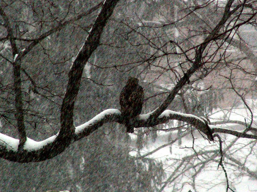 Hawk Photograph - Daydream by Steve Rudolph