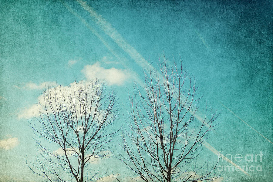 Trees Photograph - Daydreamer by Angela Doelling AD DESIGN Photo and PhotoArt
