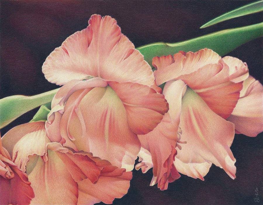 Gladiolas Drawing - Daylights Last Dance by Amy S Turner
